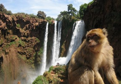 Ouzoud waterfalls 1 Day Tour from Marrakesh