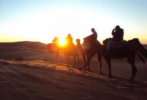 Sunset Camel treks at erg chebbi dunes merzouga